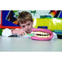 Giant Teeth Demonstration Set