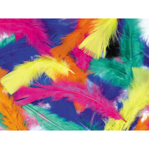 Feathers - Assorted