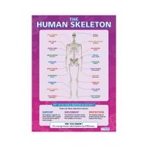Human Body Poster Set